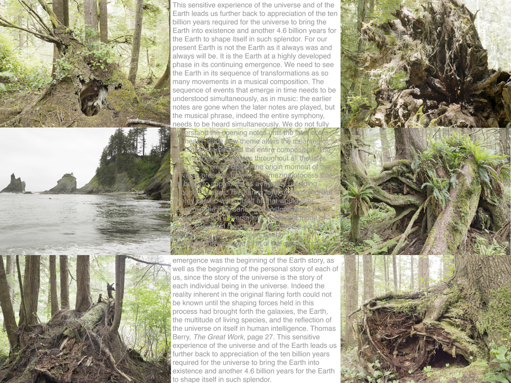 03_Rainforest_ThomasBerry_GRID