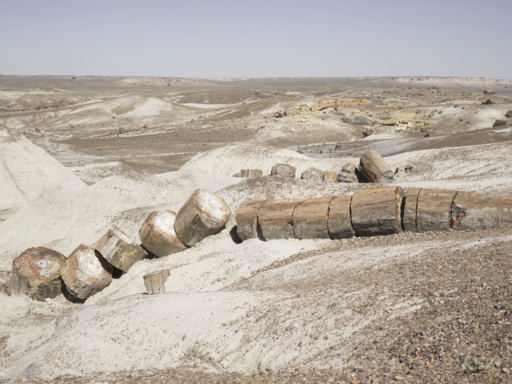 12_Petrified_Forest_1