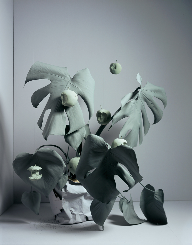 Brand_12_symbiosis-monstera