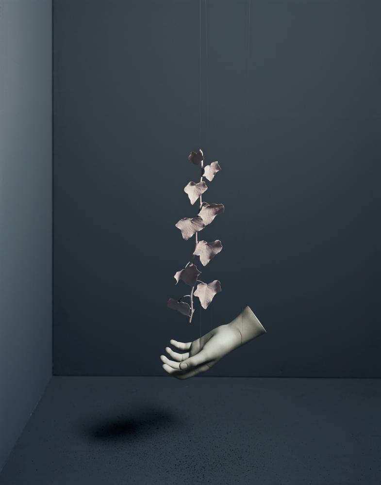 Brand_13_symbiosis-ivy