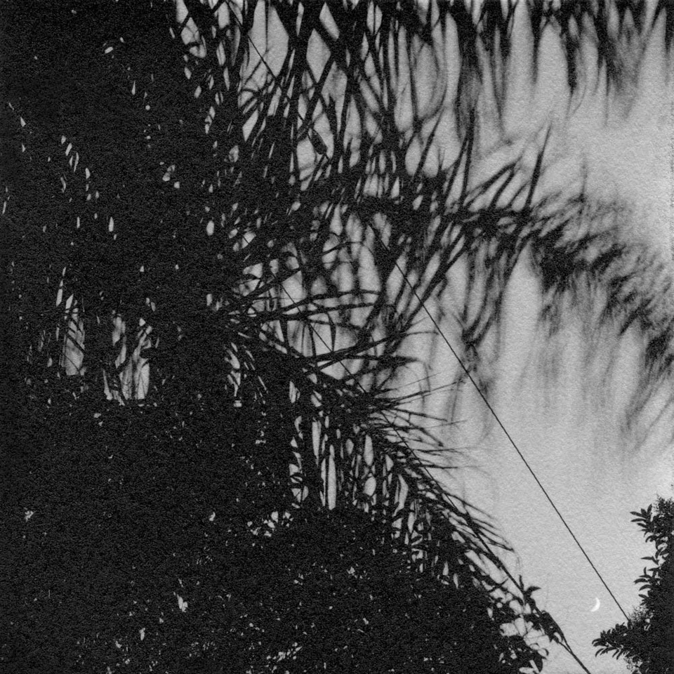 Night Palms and Crescent Moon_LeBlanc_1000