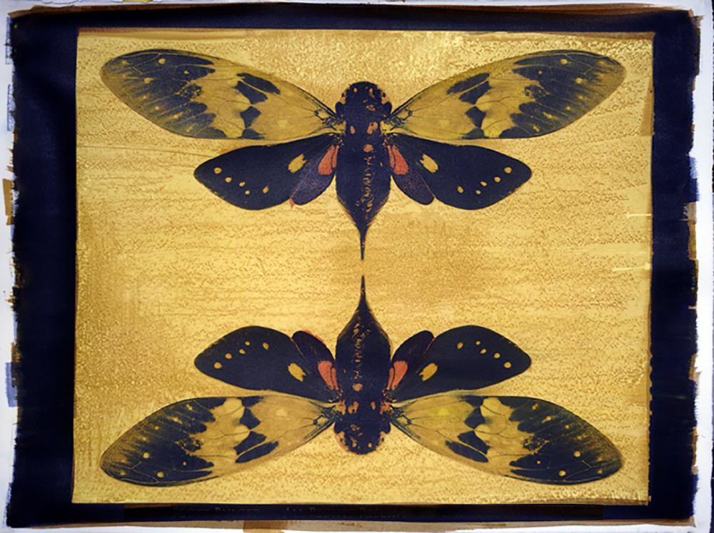 Twin Cicada