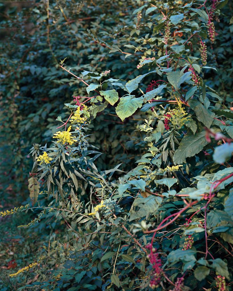 Summer Wreath_v2