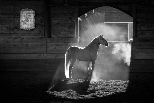 Keron Psillas: Cavalo Lusitano: The Spirit Within