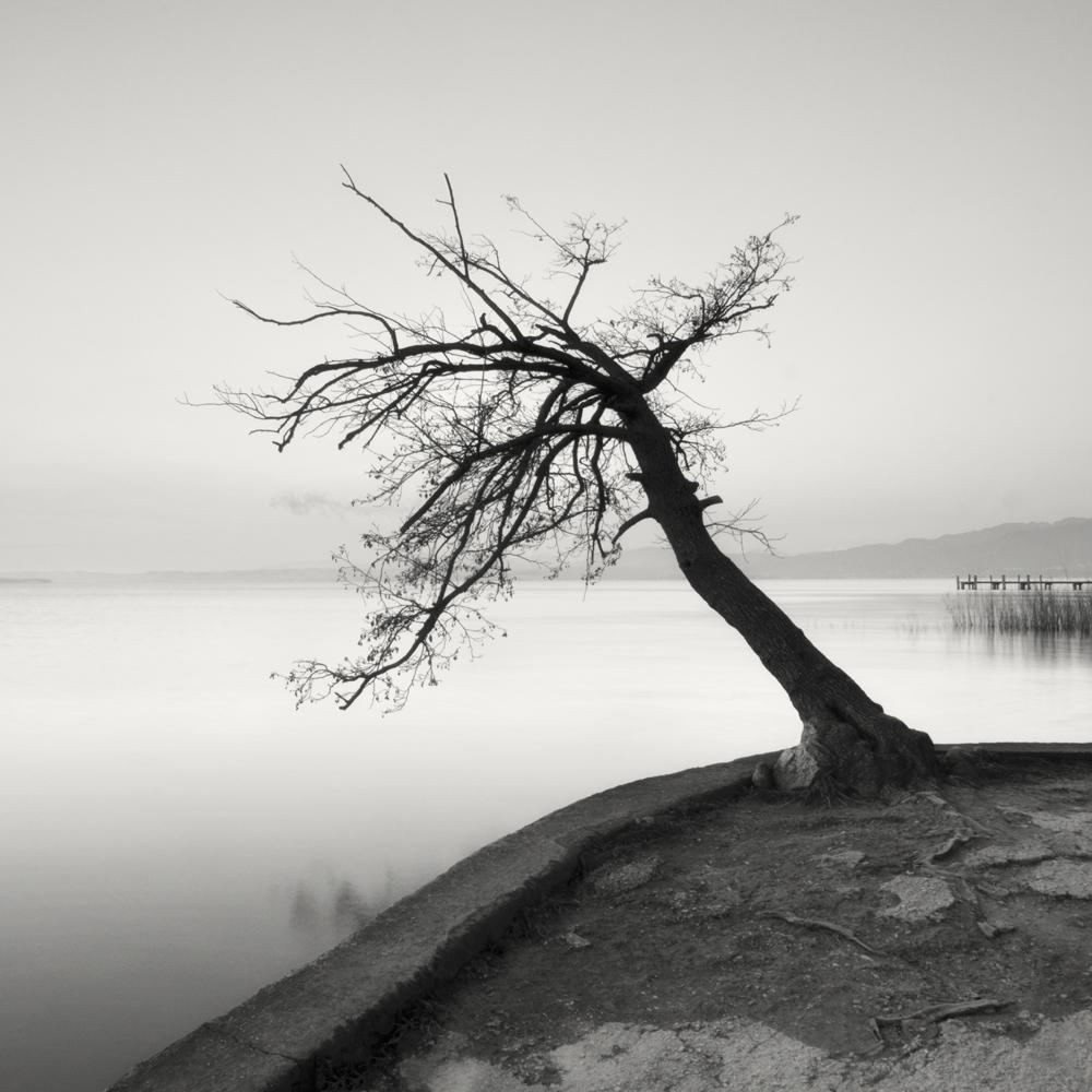 29. Albero Dall'acqua II. Italy. 2013