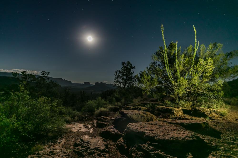 ©Dora Redman, Ocotillo Moonlit, Sedona, AZ, https---www.auroradora.com