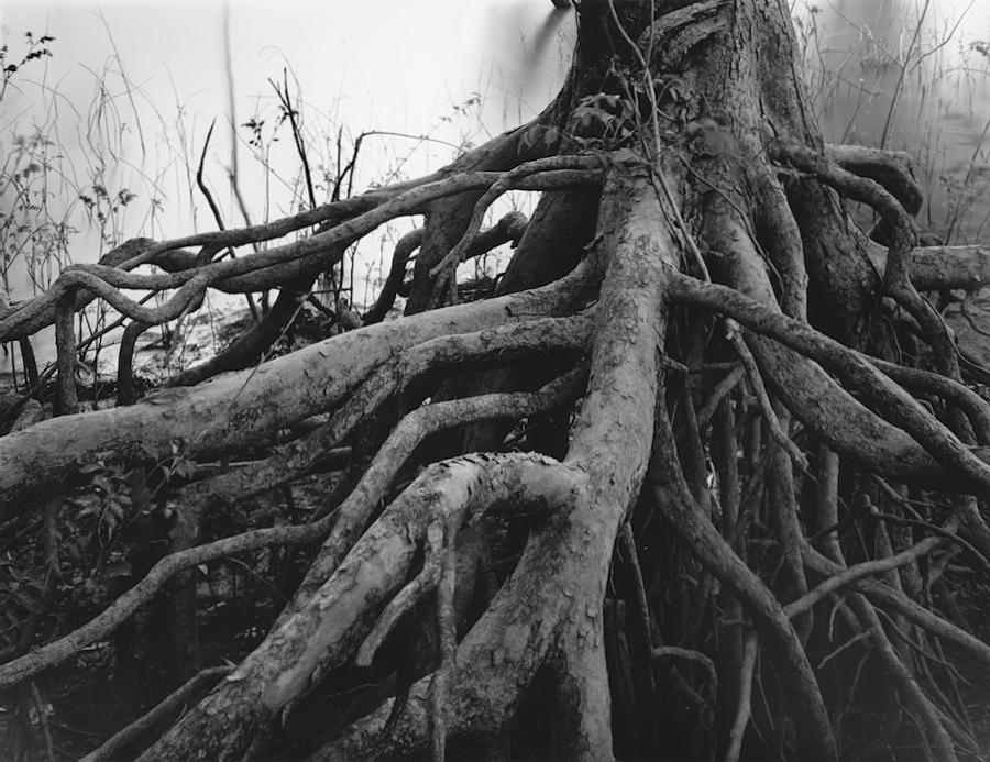 3-EOKerr_OntheBatture_Roots