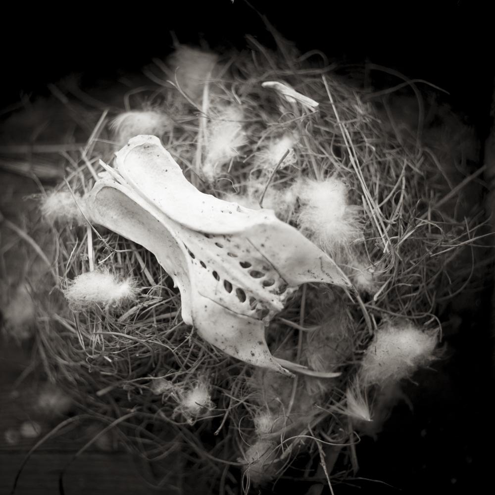 Skulls, Nests & Feathers
