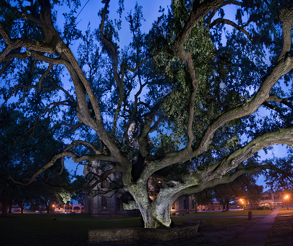 "The Goliad Hanging Tree is a symbol of justice, Texas-style. For 24 years the court trials of Goliad County were held under this big oak tree. Death sentences were carried out promptly, usually within a few minutes, courtesy of the tree's many handy noose-worthy branches. The tree also served as a gallows for approximately 75 lynchings, many during the 1857 ""Cart War"" between Texans and Mexicans. No tally was kept for how many men died in The Hanging Tree, but some estimates range into the low hundreds."