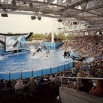 Shamu, Sea World, FL