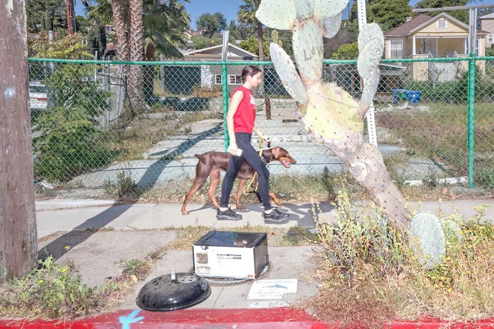 From the series, THE NATURE OF THE BEAST: Living On the Land In Los Angeles Part One: FLORA Submitted ONLY for consideration to LENSCRATCH, Jan 2019.