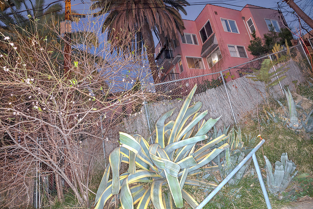 From the series, THE NATURE OF THE BEAST: Living On the Land In Los Angeles Part One: FLORA Submitted ONLY for consideration to LENSCRATCH, Jan 2019