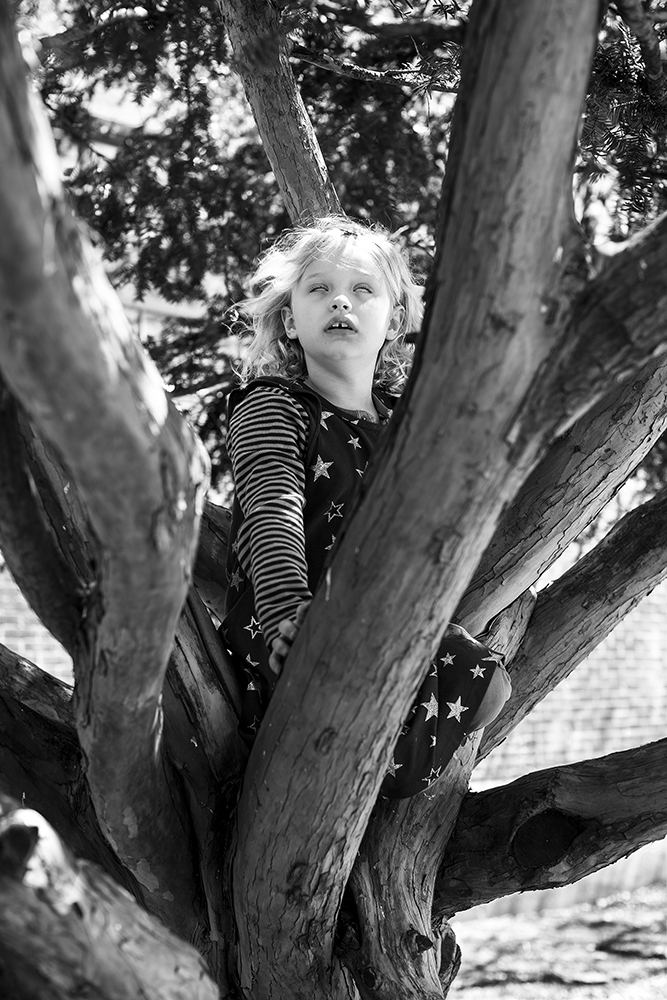 YOUNG BOY IN A TREE_FMullaney