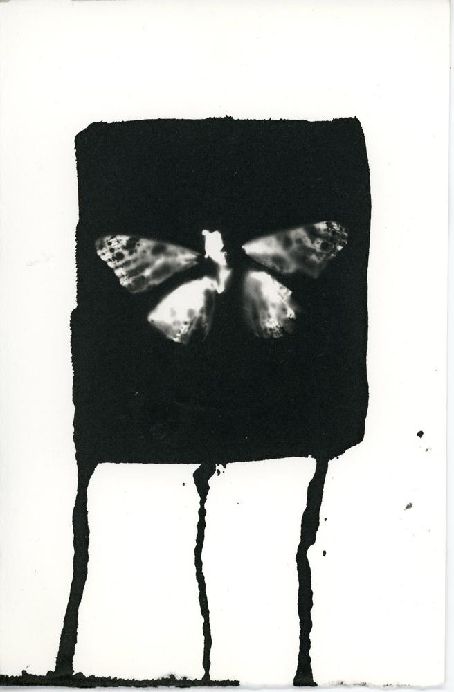 03_13_Butterfly_13