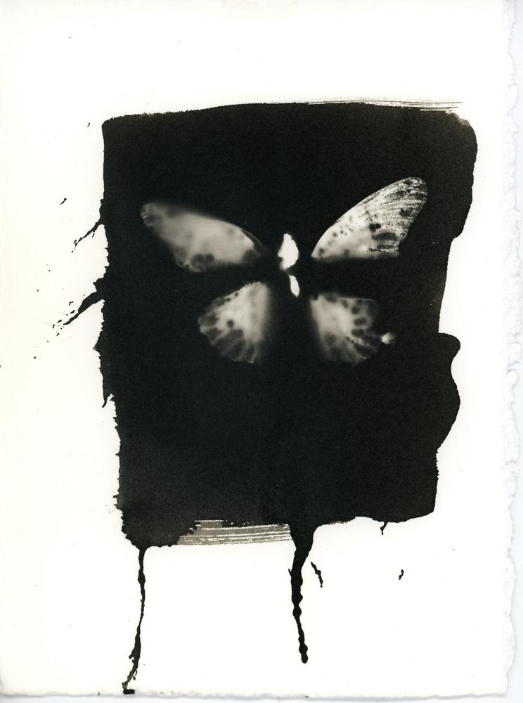 06_10_Butterfly_10