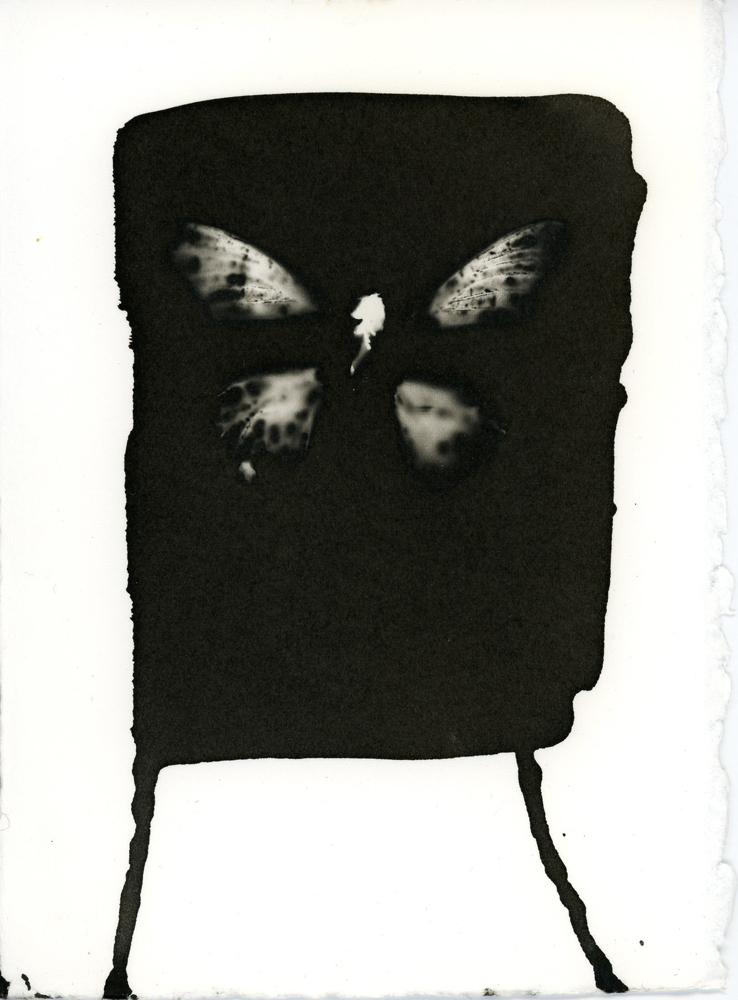 07_09_Butterfly_9