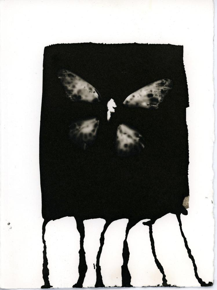 09_07_Butterfly_7