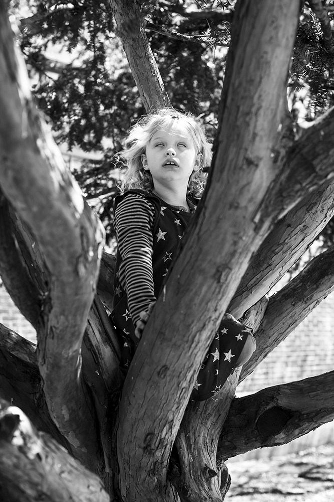 2_YOUNG CHILD IN A TREE, BROOKLYN
