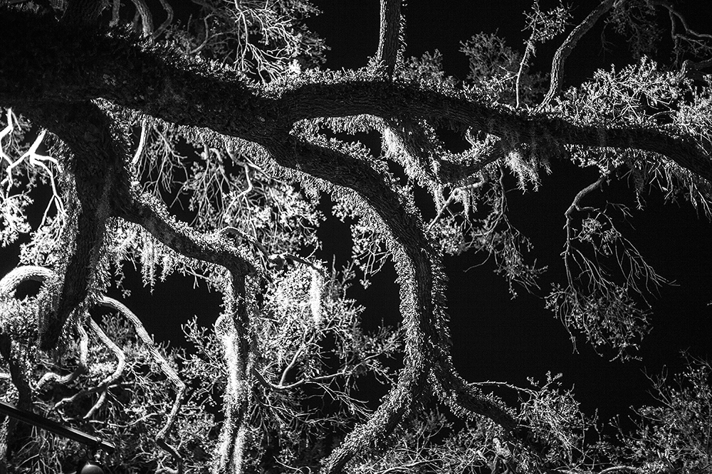 5_TREE AT NIGHT, SAVANNAH, GA