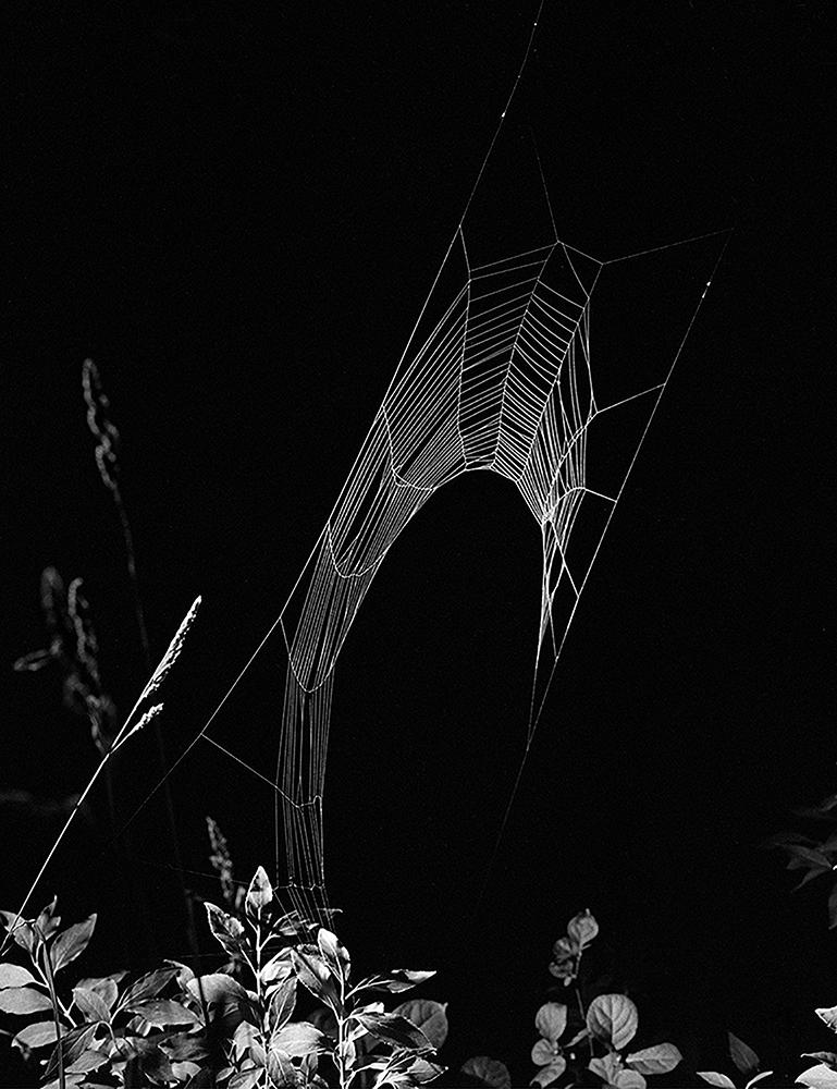 Web Submerged