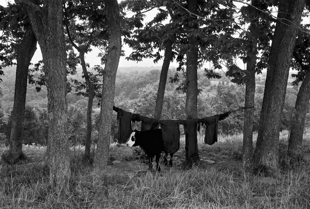 Cow Rags, Jessamine County