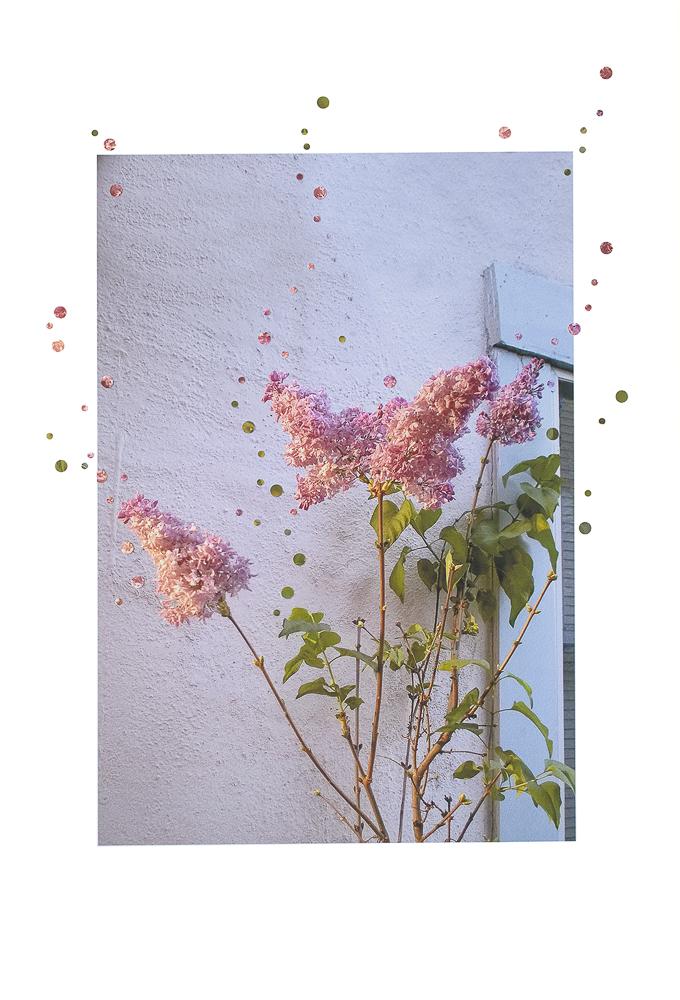 12-Nathalie_ Seaver -4 Lilacs, 2 Lights 72