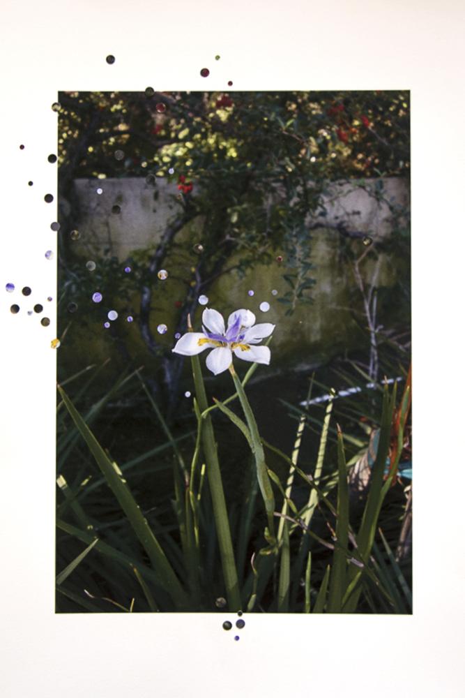 15-Nathalie_Seaver-White Iris