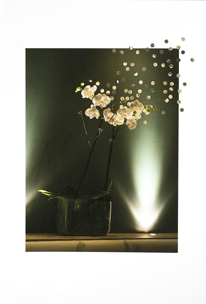 2-Nathalie_Seaver- Night OrchidsComp