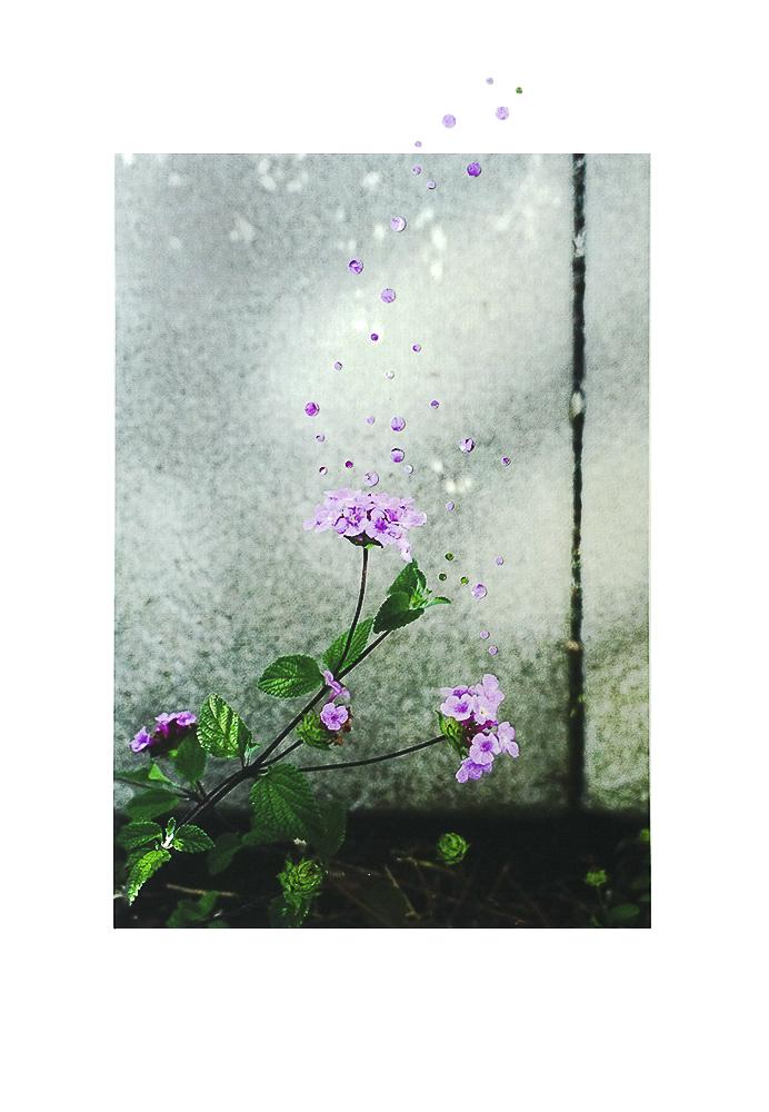 3_Nathalie Seaver_Little Lilac flowers