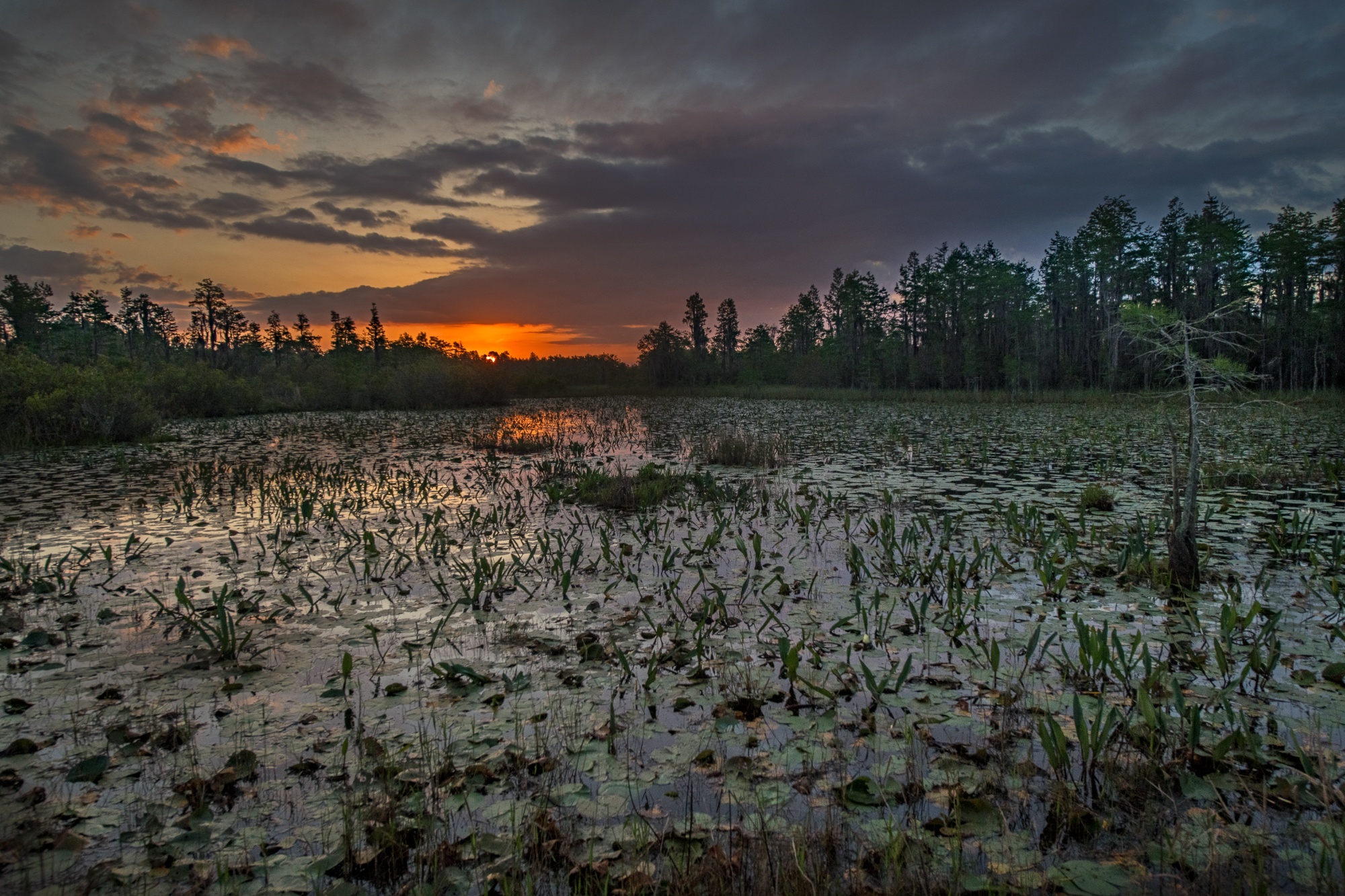 Sunrise Okefenokee Swamp