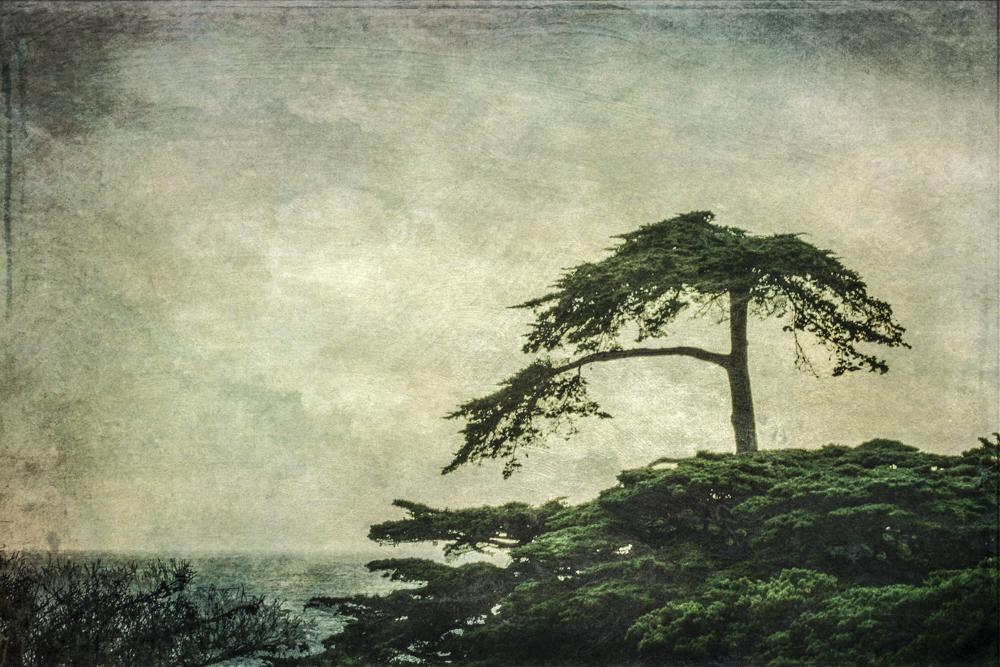 7-wendi-schneider-Cypress