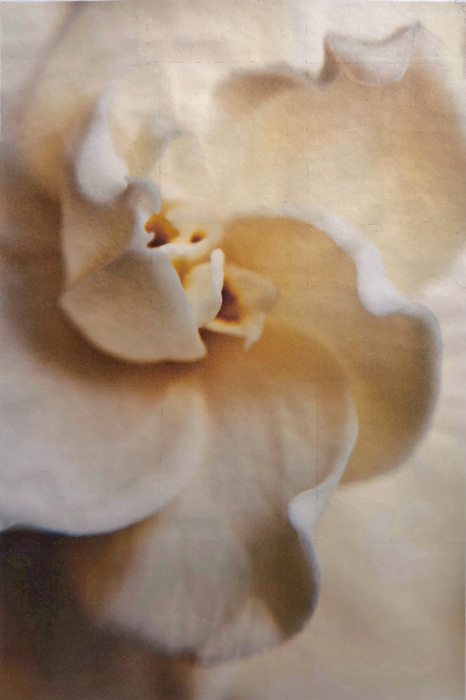 9-wendi-schneider-Gardenia