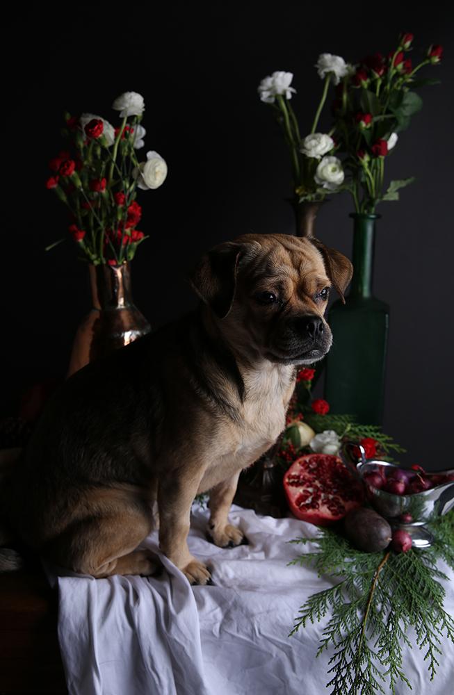 Beth-Dubber-Dog