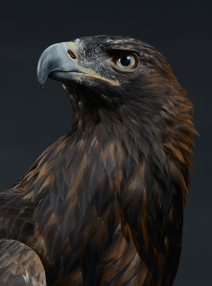 SCOTT_Golden Eagle 2