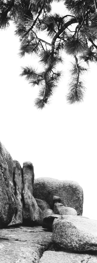 Limber Pine Vedawoo