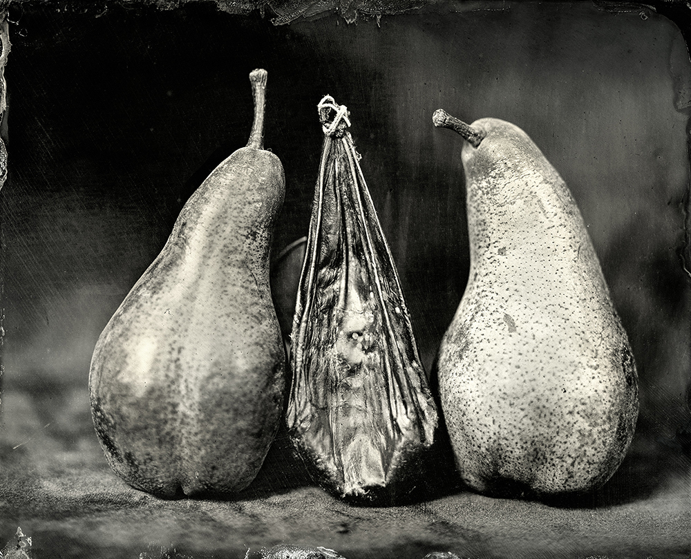 1Bear Gallbladder with Bosc Pears_Christine Fitzgerald