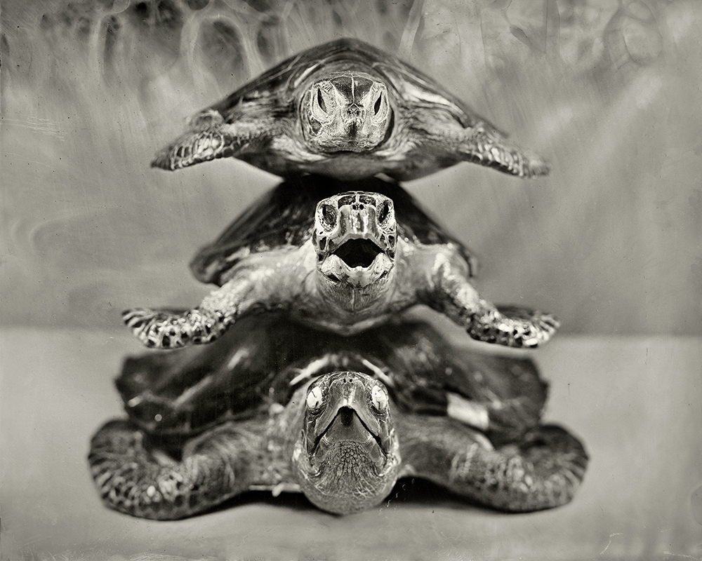 3Stacked Turtles_Christine Fitzgerald