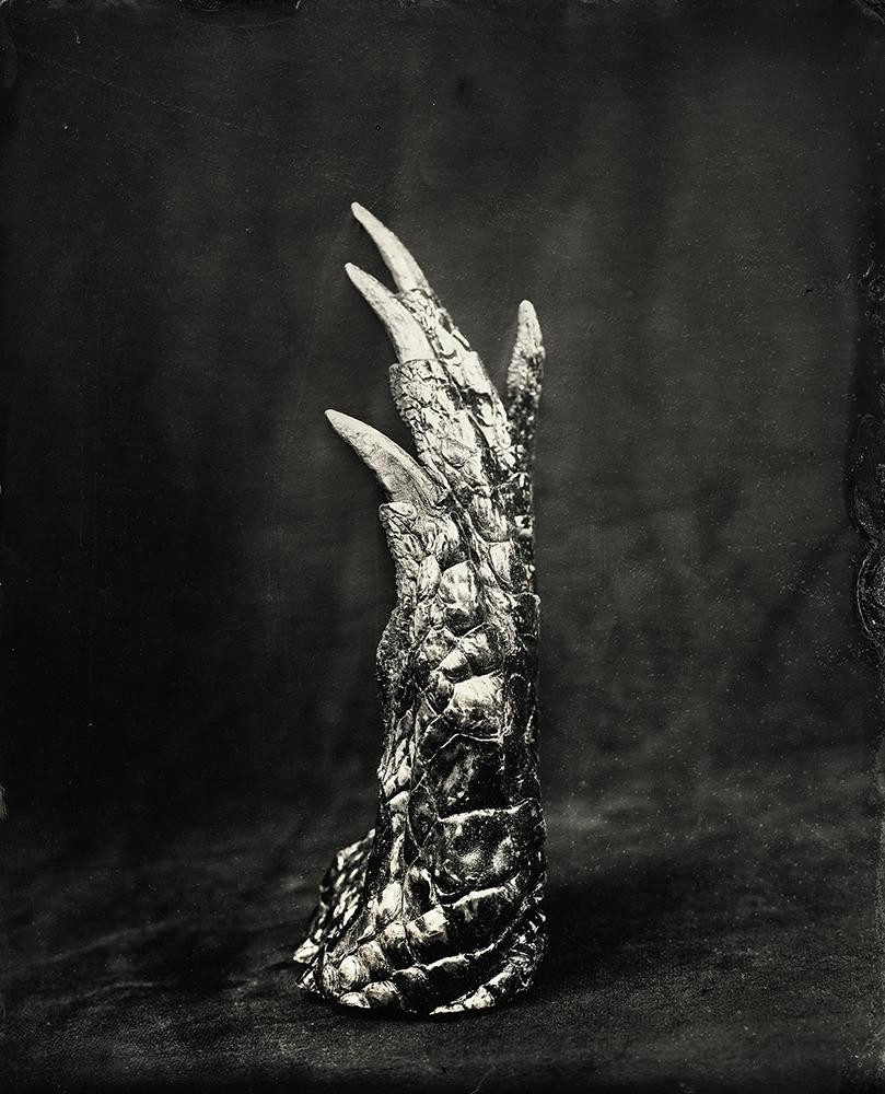 5Crocodile Claw_Christine Fitzgerald