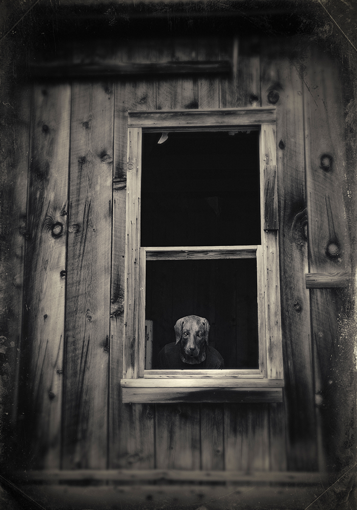 Denise Taylor wet plate dog