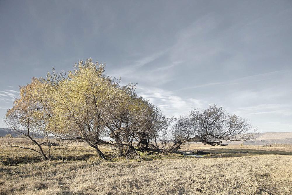 8_Smoke Creek Desert_Artesian spring_DeepHoleARanch_NV
