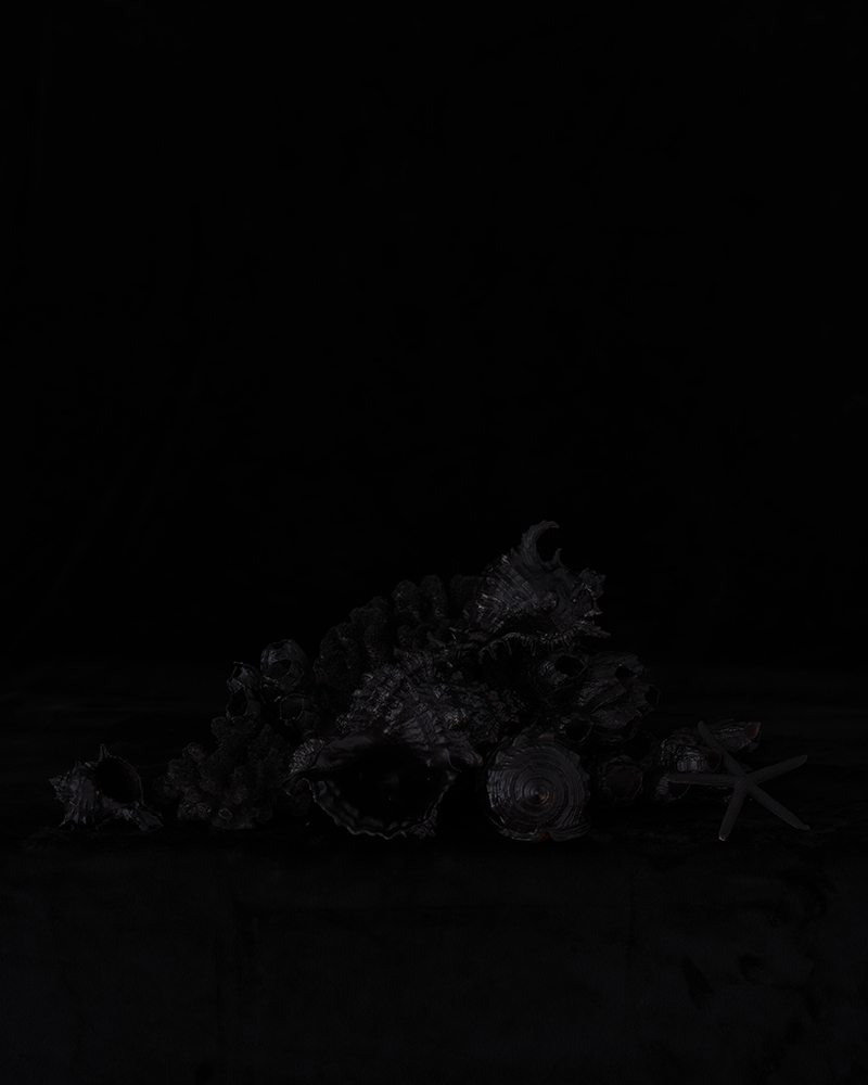 Black Memorabilia #16