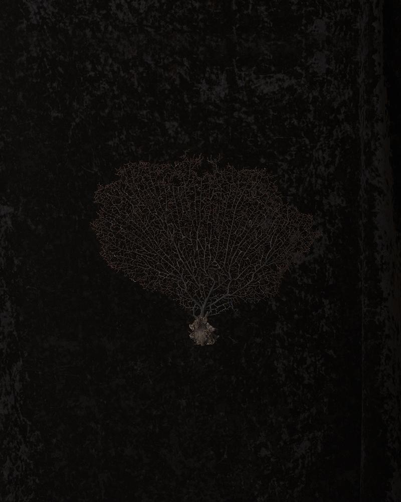 Black Memorabilia #7