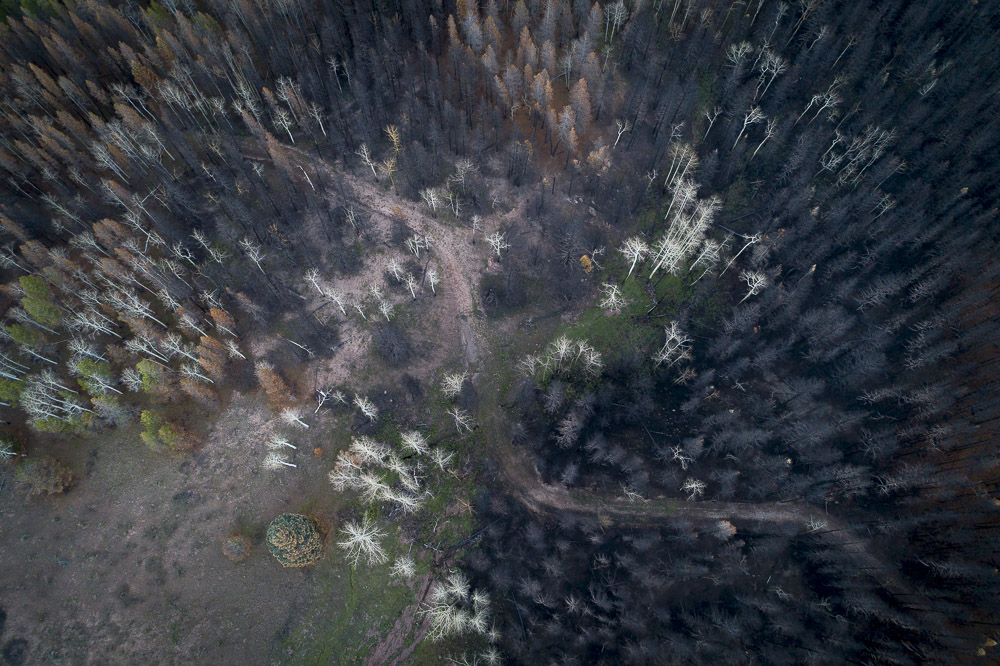 Spring Creek (2018) [10/21/18, #195]