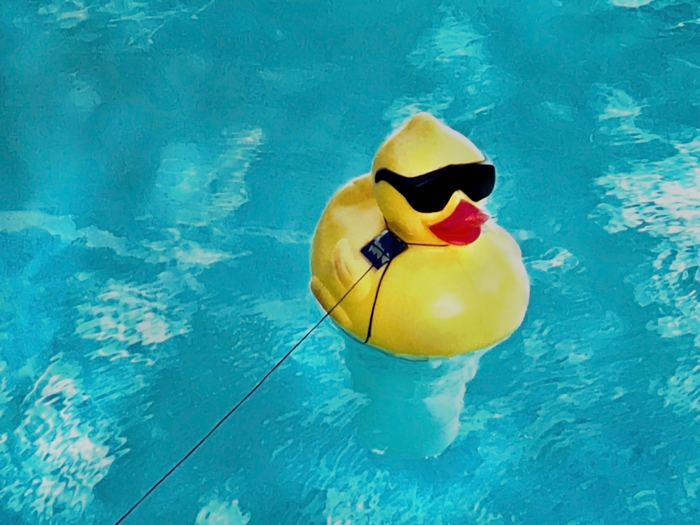 Color photo of a tethered yellow floating duck wearing sunglasses on the surface of a pool in Miami.