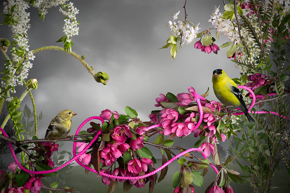 13_DeMarte Goldfinch_Pink_Cord