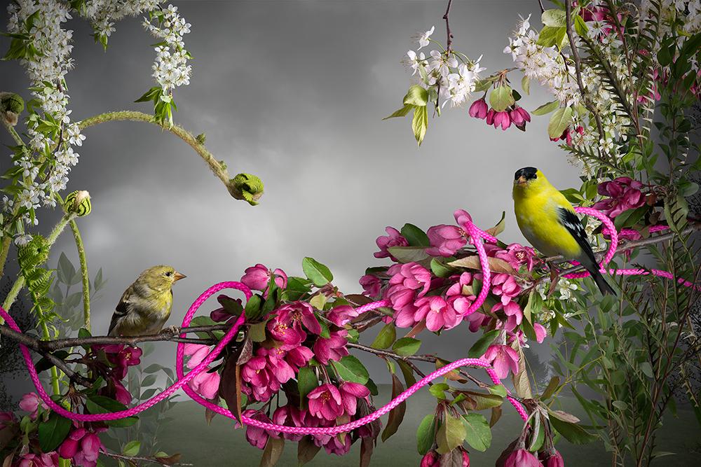 13_DeMarte Goldfinch_Pink_Cord