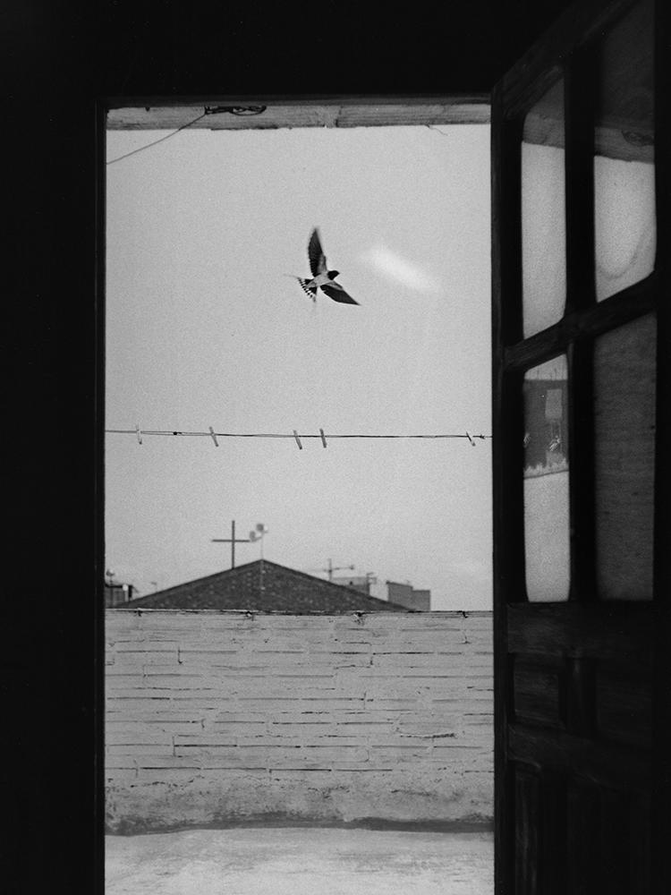 Antoni Benavente_swallow