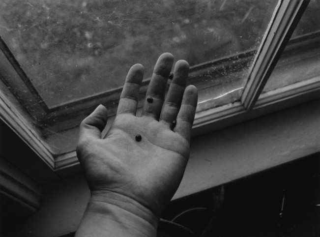 Paula_Lycan,_Ladybug_Window,_2020