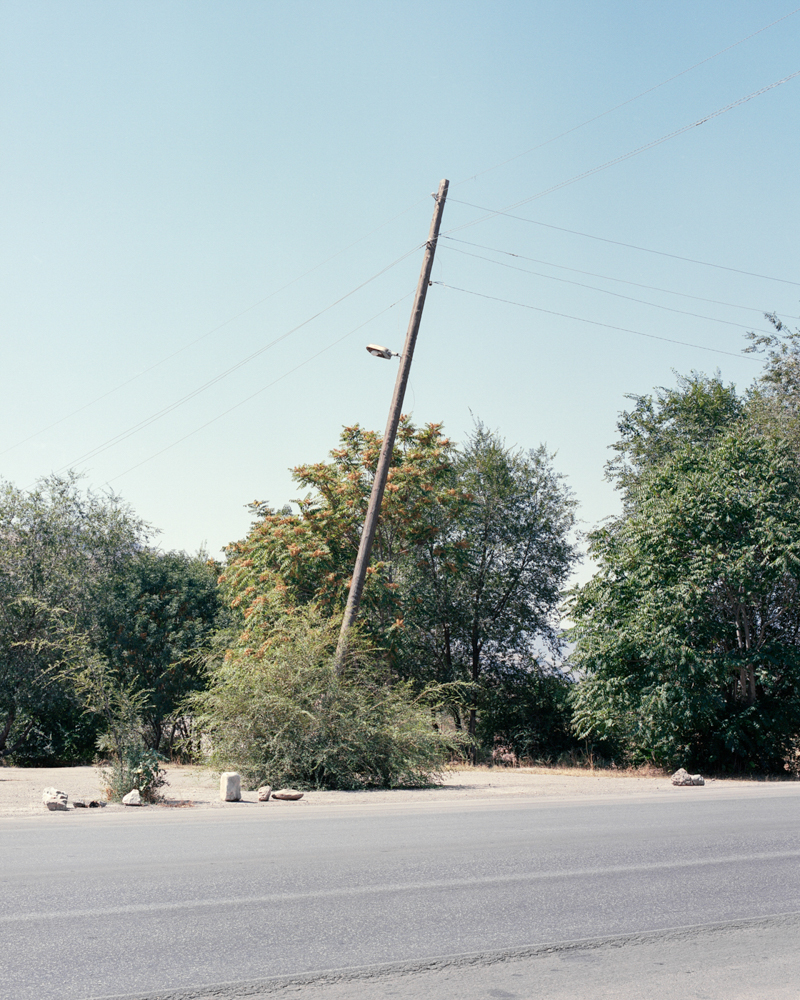 rogowski_suicidal_birds-6