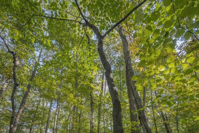 Peter Essick: Fernbank Forest